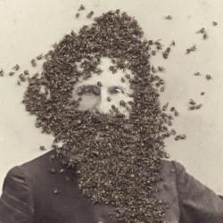 Cross Pollination Exhibit at 516 Arts, 2017